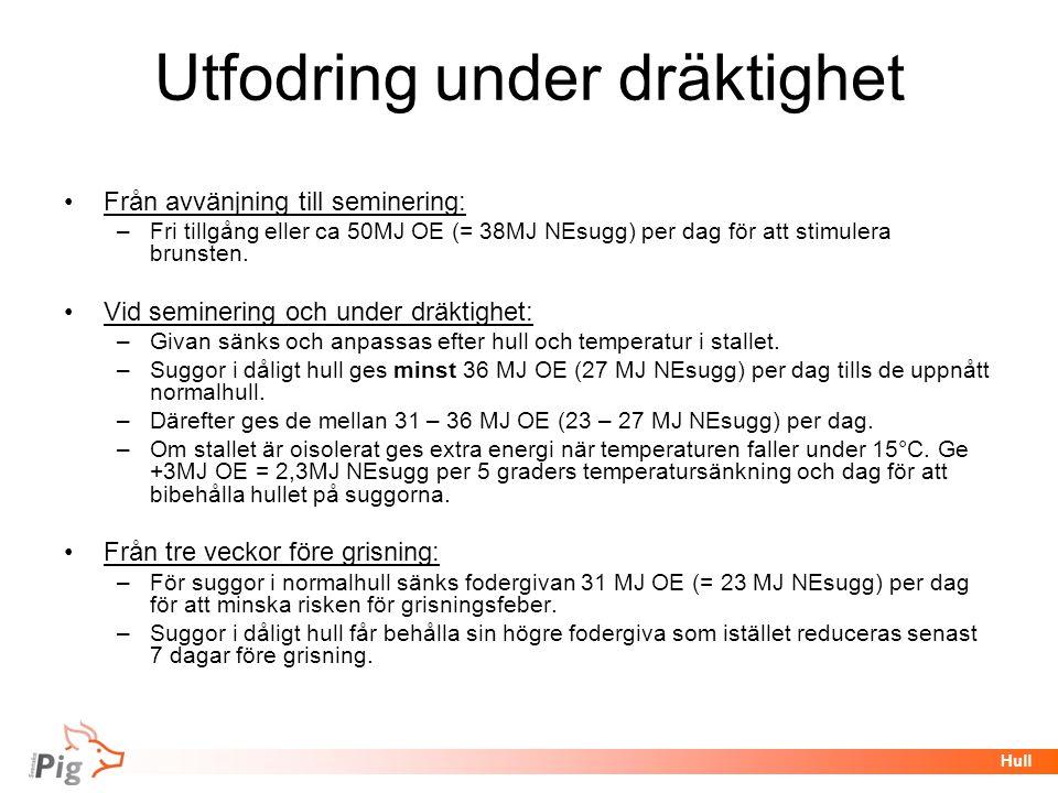 Föreläsningsrubrik / temaHull Utfodring under dräktighet •Från avvänjning till seminering: –Fri tillgång eller ca 50MJ OE (= 38MJ NEsugg) per dag för