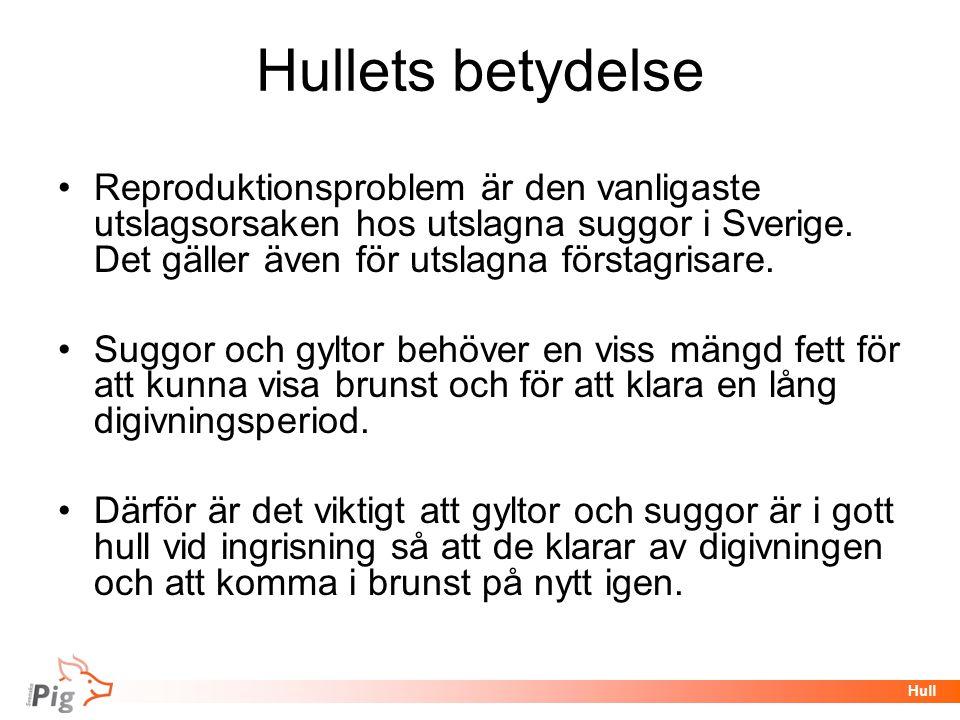 Föreläsningsrubrik / temaHull Hullets betydelse •Reproduktionsproblem är den vanligaste utslagsorsaken hos utslagna suggor i Sverige. Det gäller även