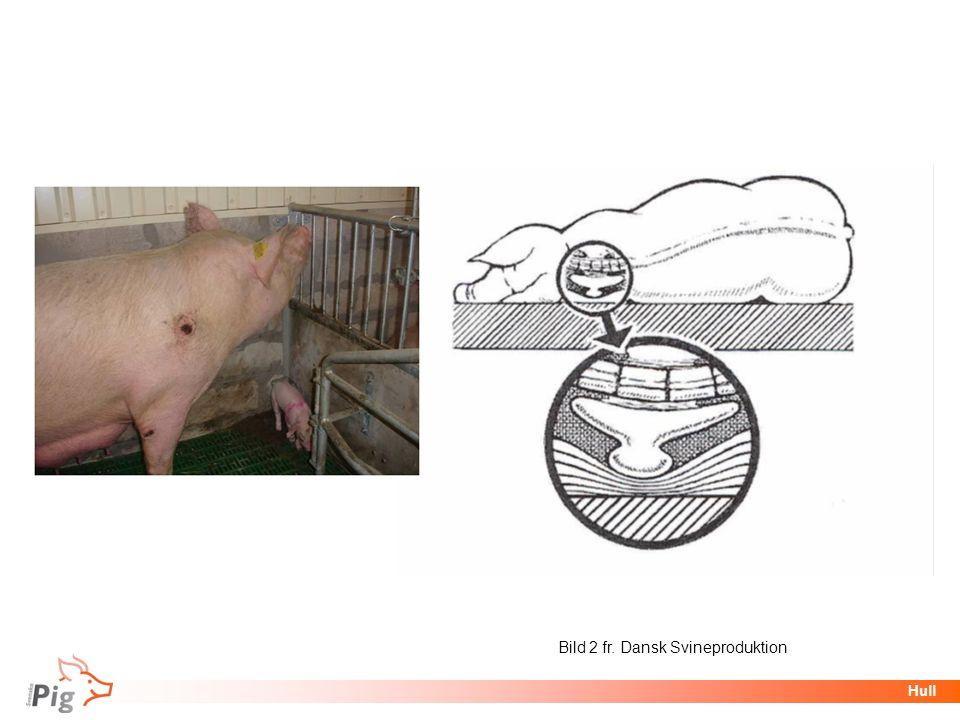 Föreläsningsrubrik / temaHull Bild 2 fr. Dansk Svineproduktion