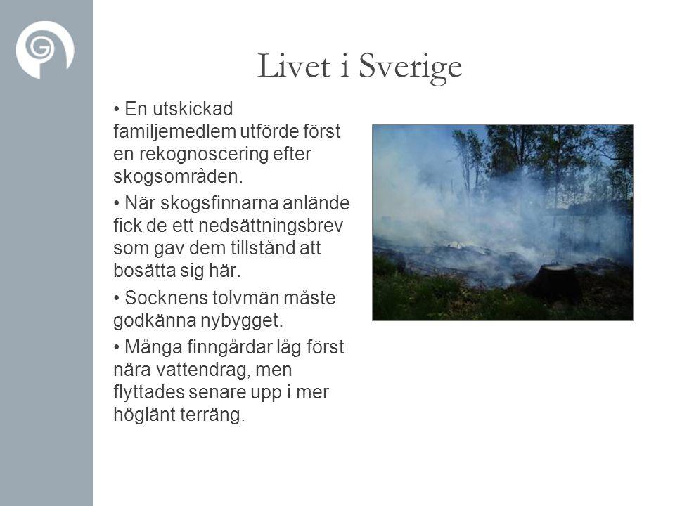 Livet i Sverige • En utskickad familjemedlem utförde först en rekognoscering efter skogsområden. • När skogsfinnarna anlände fick de ett nedsättningsb
