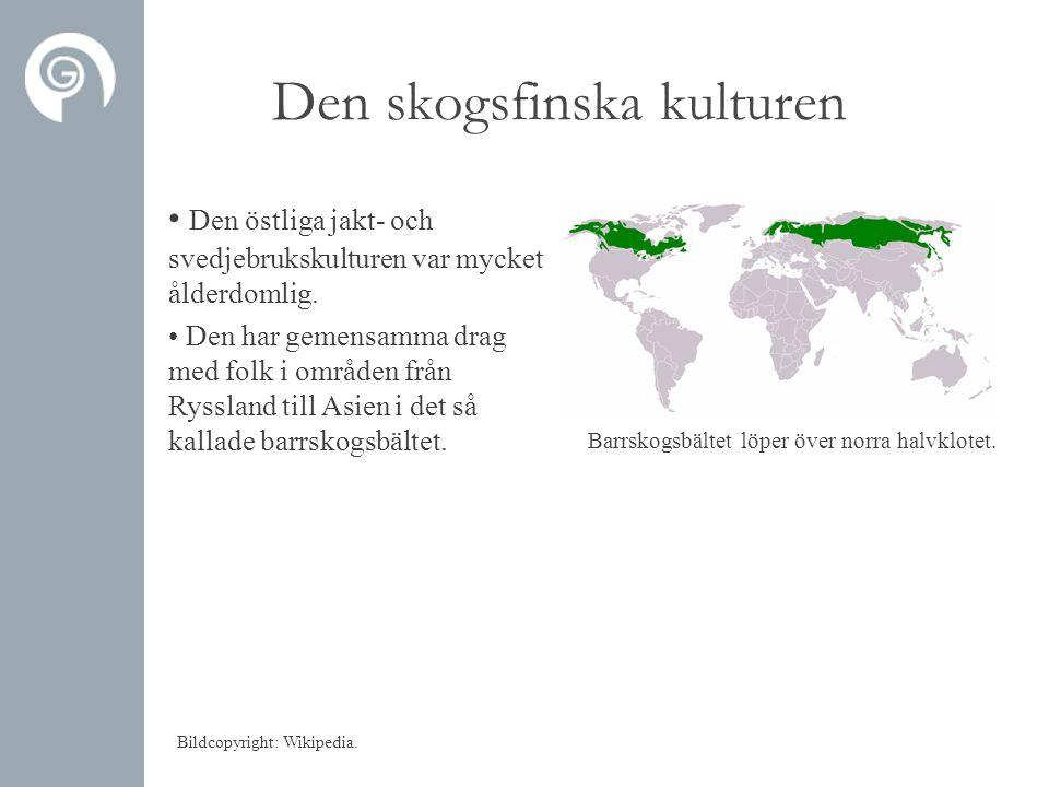Den skogsfinska kulturen • Den östliga jakt- och svedjebrukskulturen var mycket ålderdomlig.