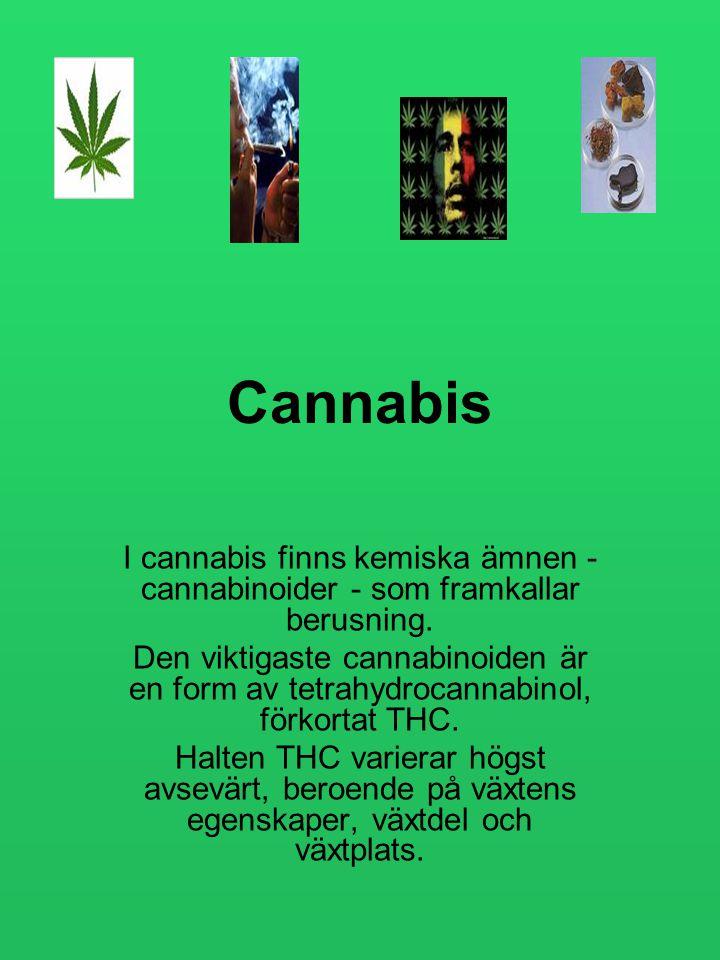 Cannabis I cannabis finns kemiska ämnen - cannabinoider - som framkallar berusning. Den viktigaste cannabinoiden är en form av tetrahydrocannabinol, f