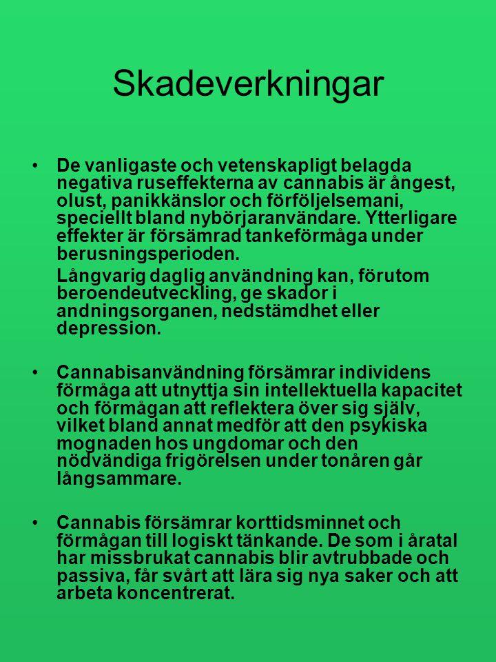 Skadeverkningar •De vanligaste och vetenskapligt belagda negativa ruseffekterna av cannabis är ångest, olust, panikkänslor och förföljelsemani, specie
