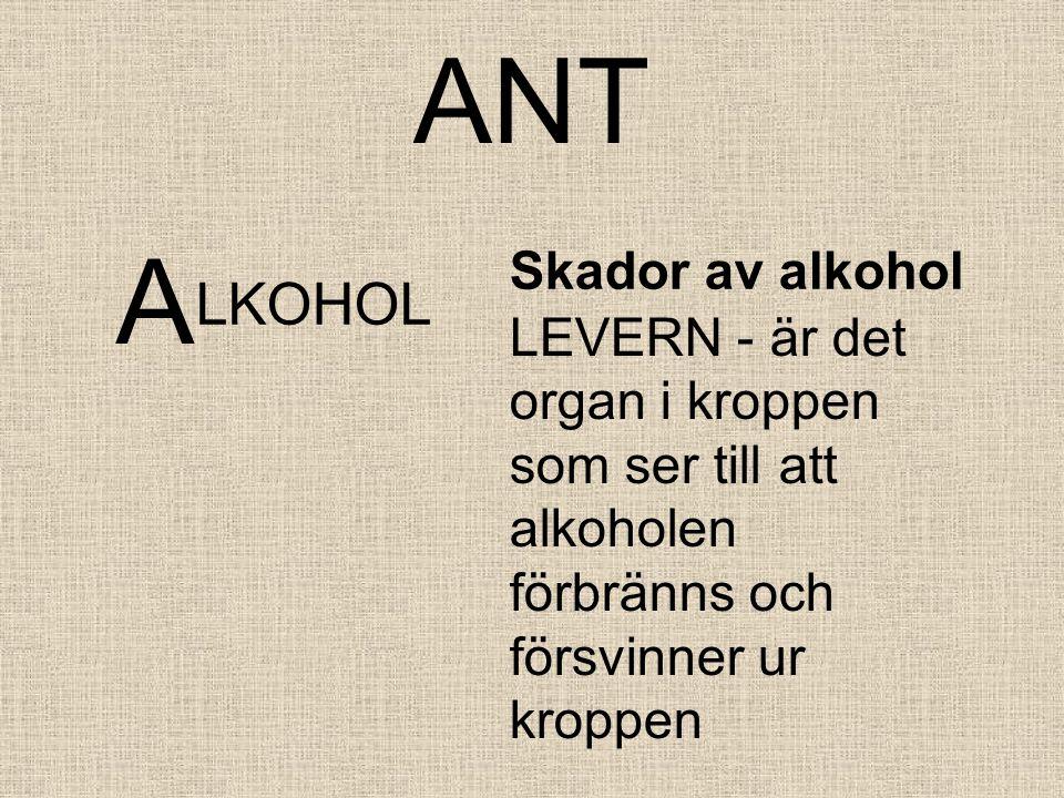 ANT A LKOHOL Skador av alkohol LEVERN - är det organ i kroppen som ser till att alkoholen förbränns och försvinner ur kroppen