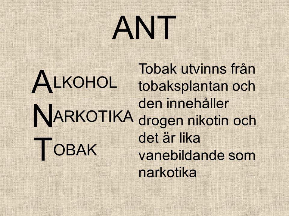 ANT A LKOHOL Tobak utvinns från tobaksplantan och den innehåller drogen nikotin och det är lika vanebildande som narkotika N ARKOTIKA T OBAK