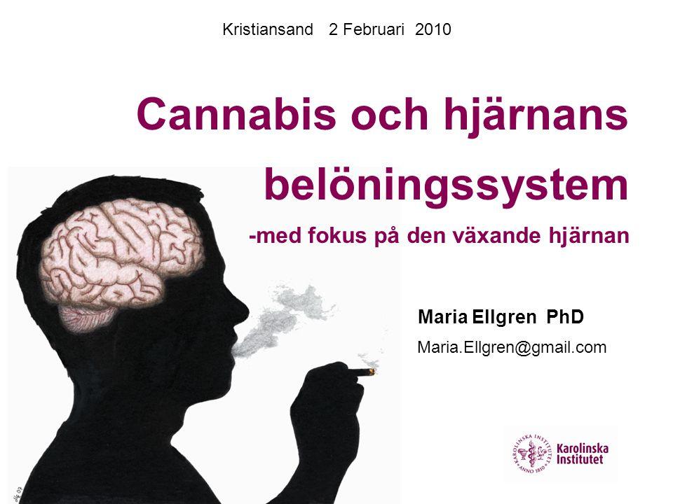 Cannabis och hjärnans belöningssystem -med fokus på den växande hjärnan Maria.Ellgren@gmail.com Maria Ellgren PhD Kristiansand 2 Februari 2010