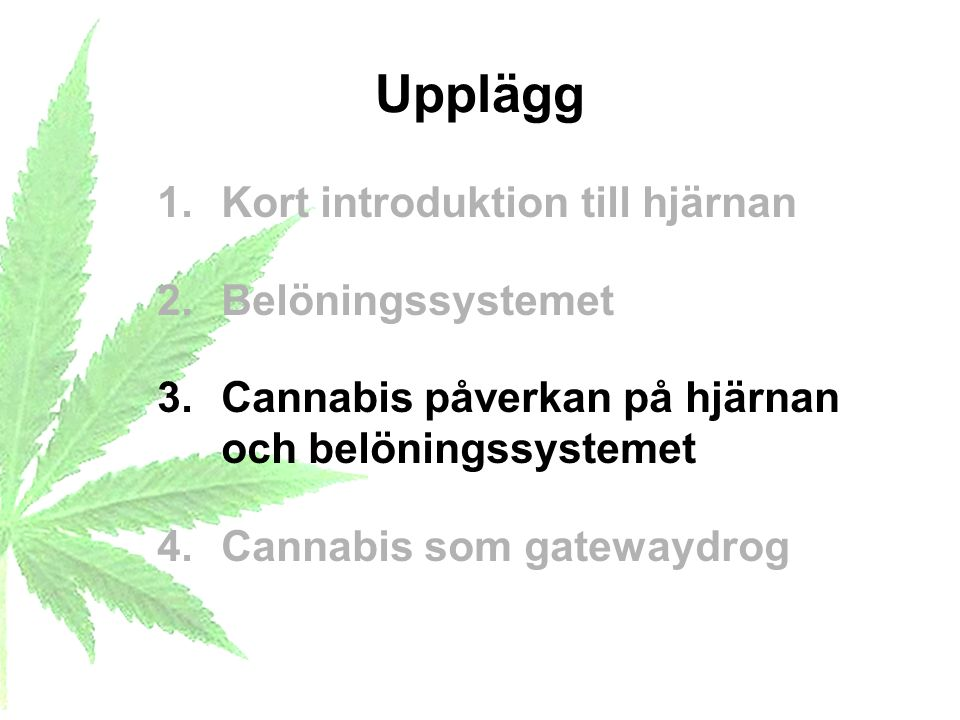 Upplägg 1.Kort introduktion till hjärnan 2.Belöningssystemet 3.Cannabis påverkan på hjärnan och belöningssystemet 4.Cannabis som gatewaydrog