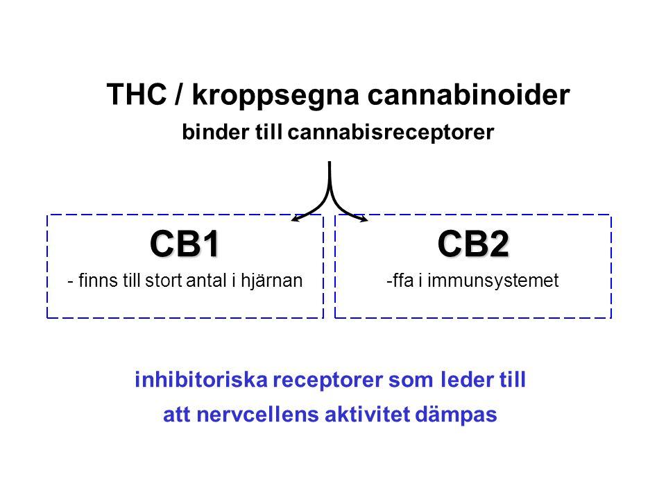 THC / kroppsegna cannabinoider binder till cannabisreceptorer CB1 - finns till stort antal i hjärnanCB2 -ffa i immunsystemet inhibitoriska receptorer