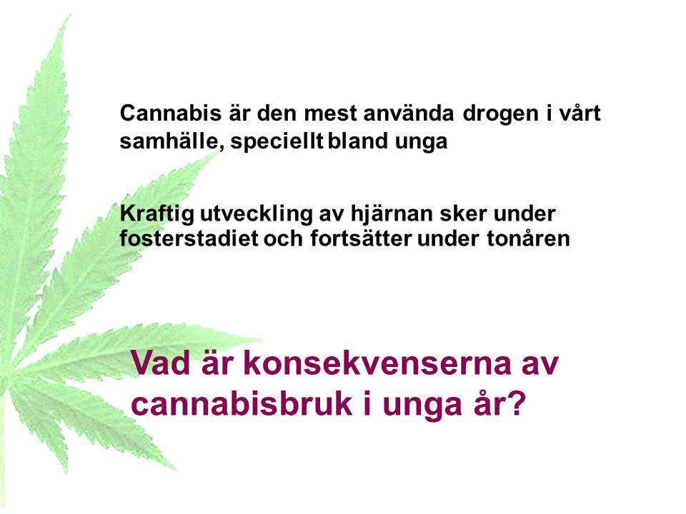 Kraftig utveckling av hjärnan sker under fosterstadiet och fortsätter under tonåren Cannabis är den mest använda drogen i vårt samhälle, speciellt bla