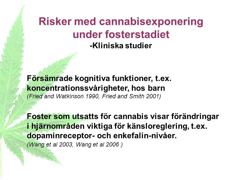 Risker med cannabisexponering under fosterstadiet -Kliniska studier Försämrade kognitiva funktioner, t.ex. koncentrationssvårigheter, hos barn (Fried