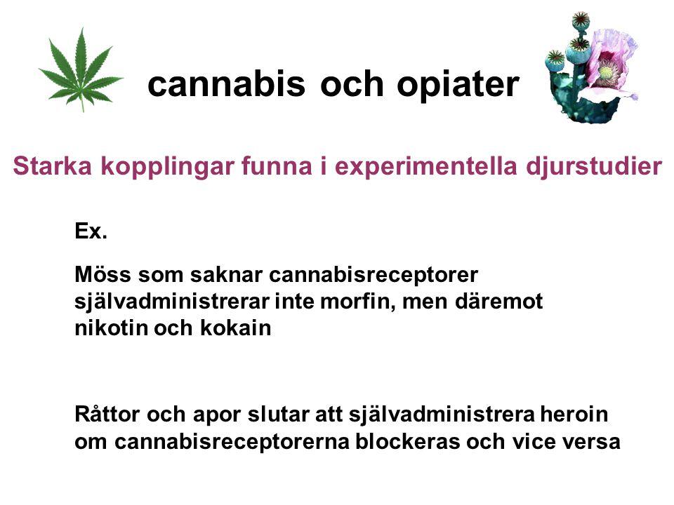 Ex. Möss som saknar cannabisreceptorer självadministrerar inte morfin, men däremot nikotin och kokain Råttor och apor slutar att självadministrera her