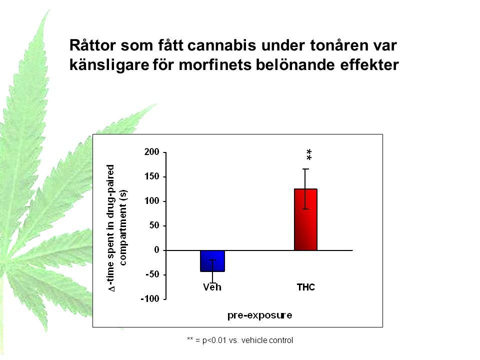Råttor som fått cannabis under tonåren var känsligare för morfinets belönande effekter ** = p<0.01 vs. vehicle control **