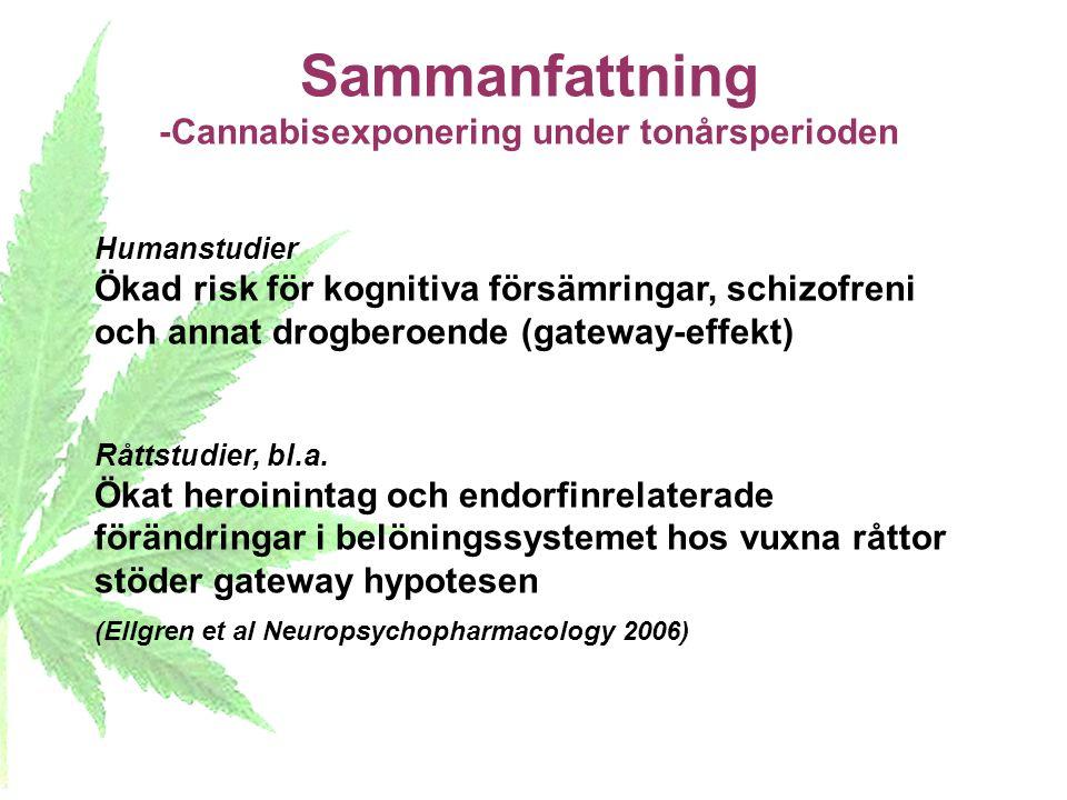 Sammanfattning -Cannabisexponering under tonårsperioden Humanstudier Ökad risk för kognitiva försämringar, schizofreni och annat drogberoende (gateway