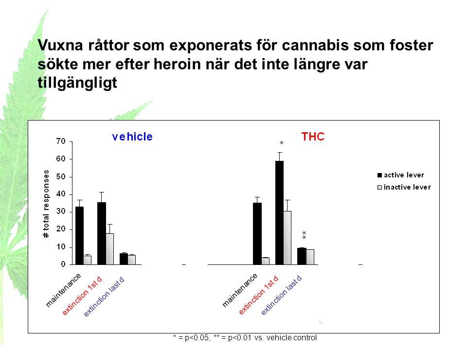 Vuxna råttor som exponerats för cannabis som foster sökte mer efter heroin när det inte längre var tillgängligt * = p<0.05, ** = p<0.01 vs. vehicle co