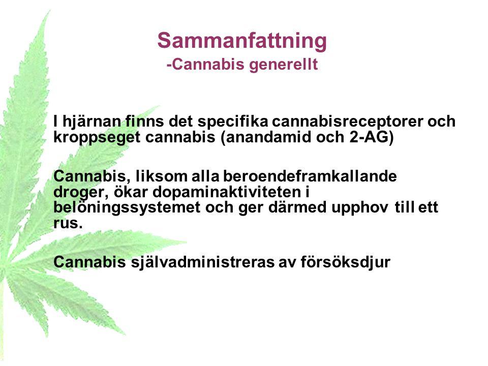 Sammanfattning -Cannabis generellt I hjärnan finns det specifika cannabisreceptorer och kroppseget cannabis (anandamid och 2-AG) Cannabis, liksom alla
