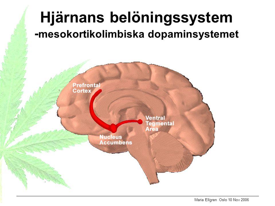 Maria Ellgren Oslo 10 Nov 2006 Hjärnans belöningssystem - mesokortikolimbiska dopaminsystemet