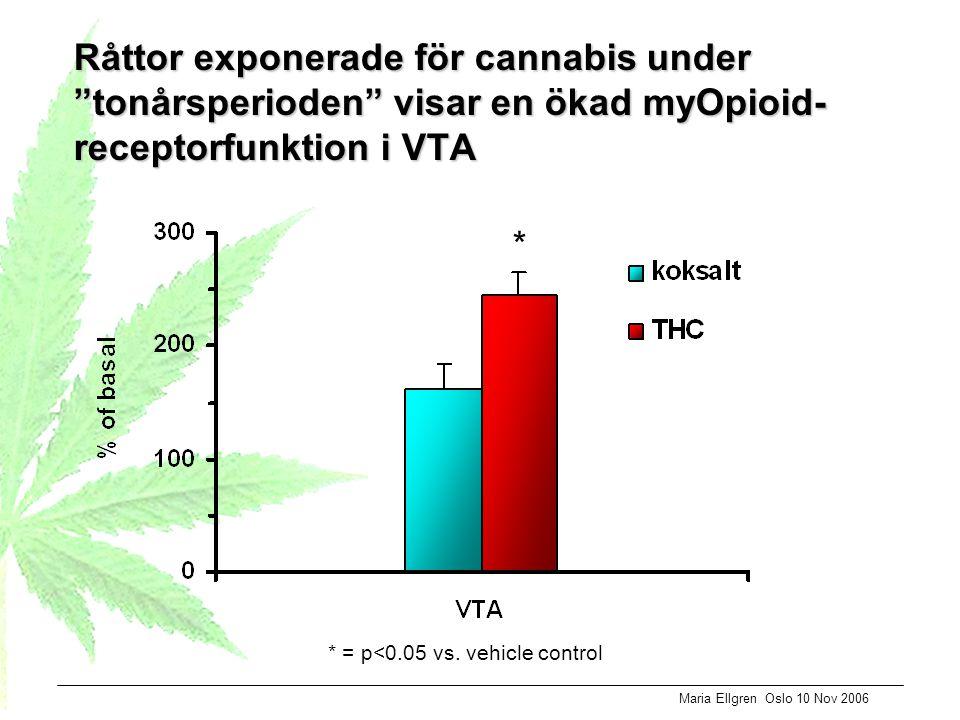 """Maria Ellgren Oslo 10 Nov 2006 Råttor exponerade för cannabis under """"tonårsperioden"""" visar en ökad myOpioid- receptorfunktion i VTA * = p<0.05 vs. veh"""
