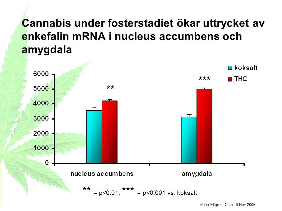 Cannabis under fosterstadiet ökar uttrycket av enkefalin mRNA i nucleus accumbens och amygdala ** *** ** = p<0.01, *** = p<0.001 vs. koksalt