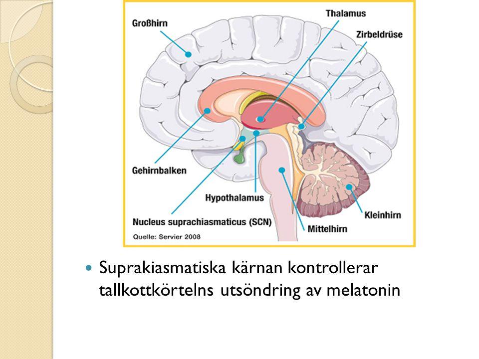 Sömnbrist påverkar:  Immunförsvaret  Minnesförmåga  Inlärning  Tillväxt  Insulinkänslighet  Blodfetter  …