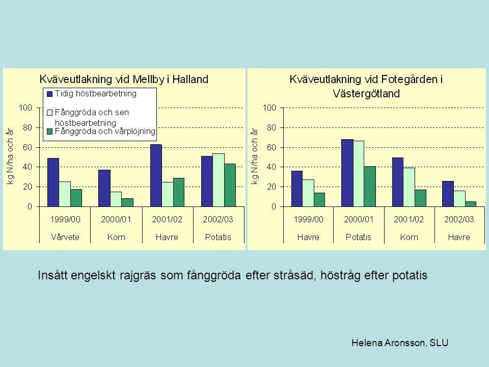 Insått engelskt rajgräs som fånggröda efter stråsäd, höstråg efter potatis Helena Aronsson, SLU