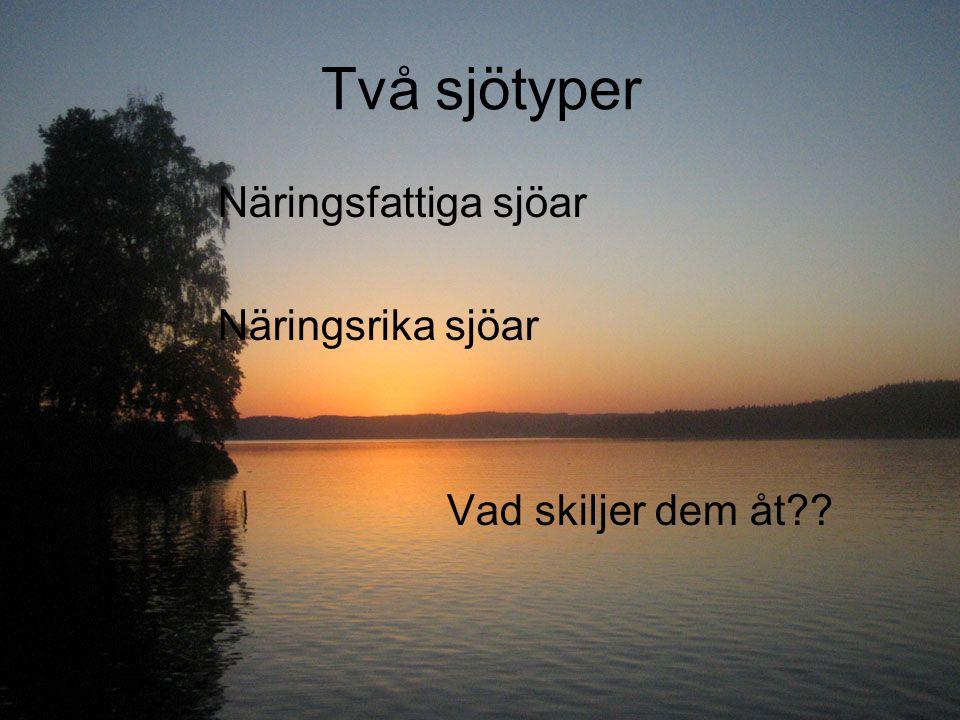 Två sjötyper Näringsfattiga sjöar Näringsrika sjöar Vad skiljer dem åt??