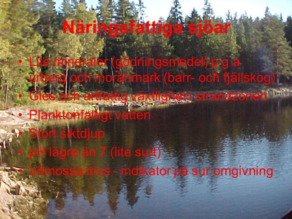 Näringsfattiga sjöar •Lite mineraler (gödningsmedel) p g a urberg och moränmark (barr- och fjällskog) •Gles och artfattig växtlighet i strandzonen •Planktonfattigt vatten •Stort siktdjup •pH lägre än 7 (lite surt) •Vitmossa trivs - indikator på sur omgivning
