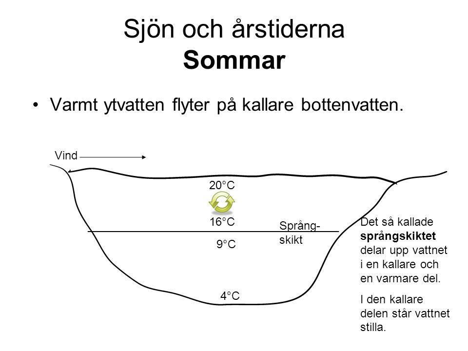 Sjön och årstiderna Sommar •Varmt ytvatten flyter på kallare bottenvatten.