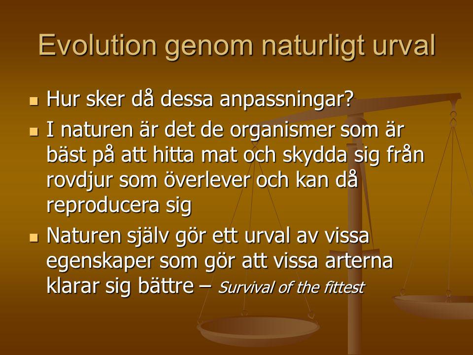 Evolution genom naturligt urval  Hur sker då dessa anpassningar?  I naturen är det de organismer som är bäst på att hitta mat och skydda sig från ro