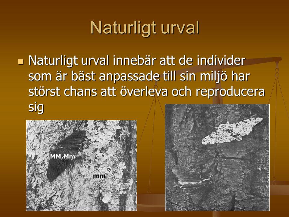 Naturligt urval  Naturligt urval innebär att de individer som är bäst anpassade till sin miljö har störst chans att överleva och reproducera sig