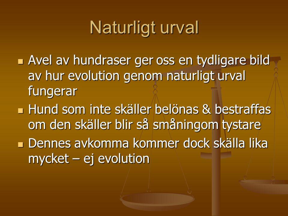 Naturligt urval  Avel av hundraser ger oss en tydligare bild av hur evolution genom naturligt urval fungerar  Hund som inte skäller belönas & bestra