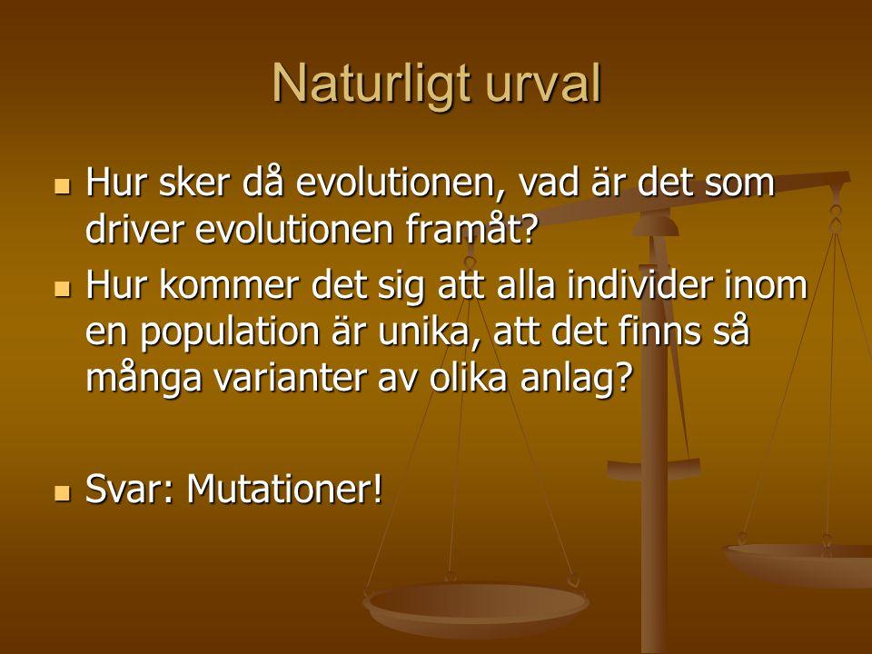 Naturligt urval  Hur sker då evolutionen, vad är det som driver evolutionen framåt?  Hur kommer det sig att alla individer inom en population är uni