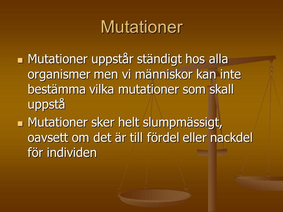 Mutationer  Mutationer uppstår ständigt hos alla organismer men vi människor kan inte bestämma vilka mutationer som skall uppstå  Mutationer sker he