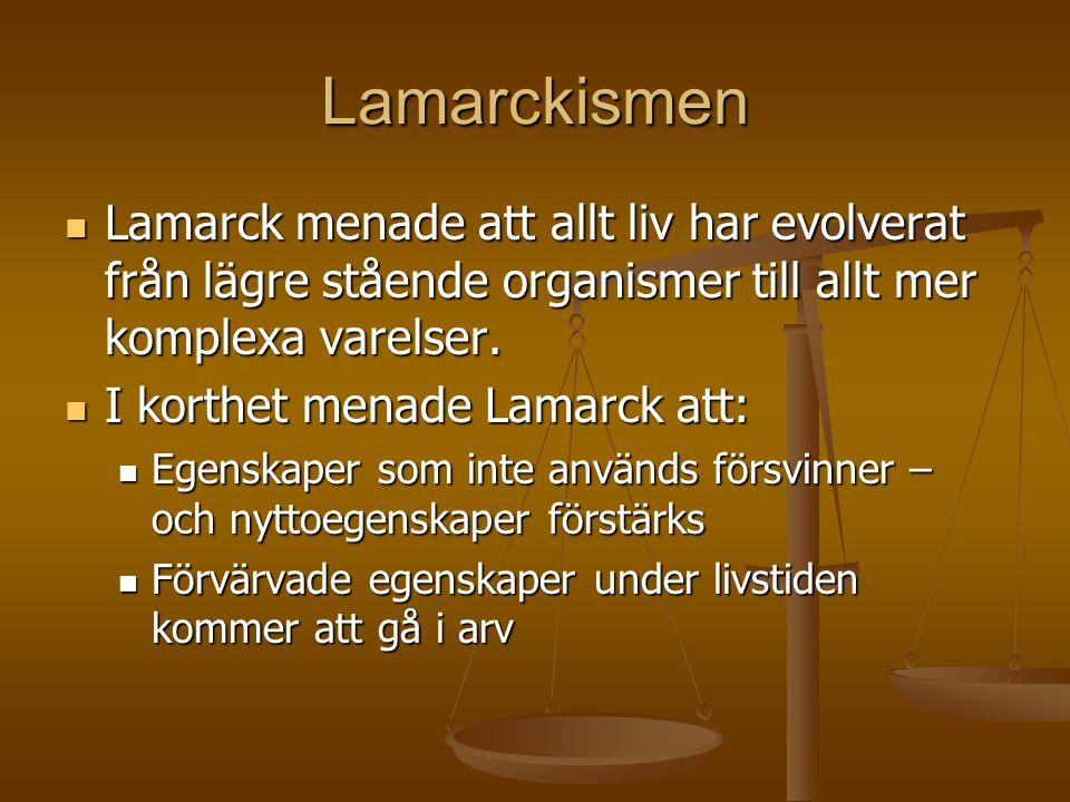 Lamarckismen  Lamarck menade att allt liv har evolverat från lägre stående organismer till allt mer komplexa varelser.  I korthet menade Lamarck att