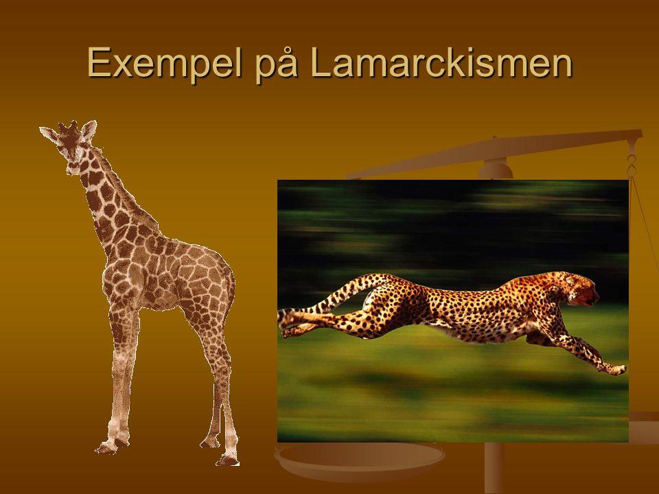 Exempel på Lamarckismen