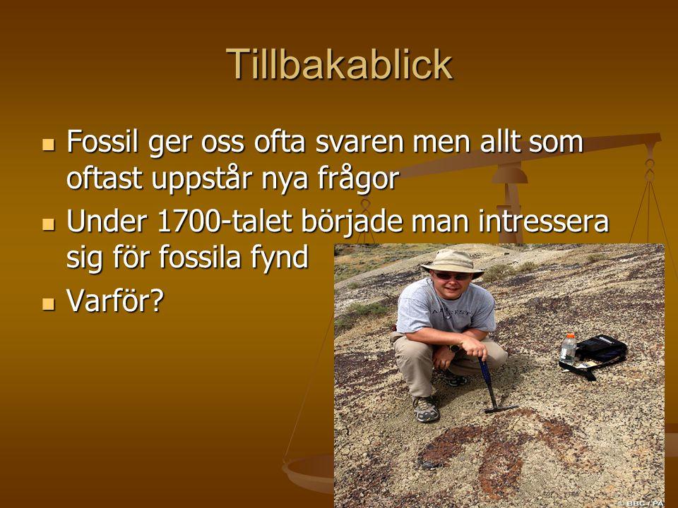 Tillbakablick  Fossil ger oss ofta svaren men allt som oftast uppstår nya frågor  Under 1700-talet började man intressera sig för fossila fynd  Var