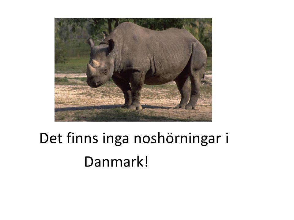 Det finns inga noshörningar i Danmark!