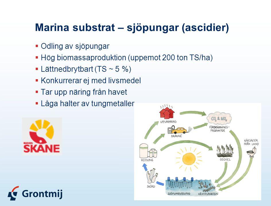 Marina substrat – sjöpungar (ascidier)  Odling av sjöpungar  Hög biomassaproduktion (uppemot 200 ton TS/ha)  Lättnedbrytbart (TS ~ 5 %)  Konkurrer
