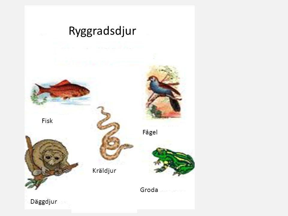 Ryggradsdjur Fisk Fågel Kräldjur Groda Däggdjur
