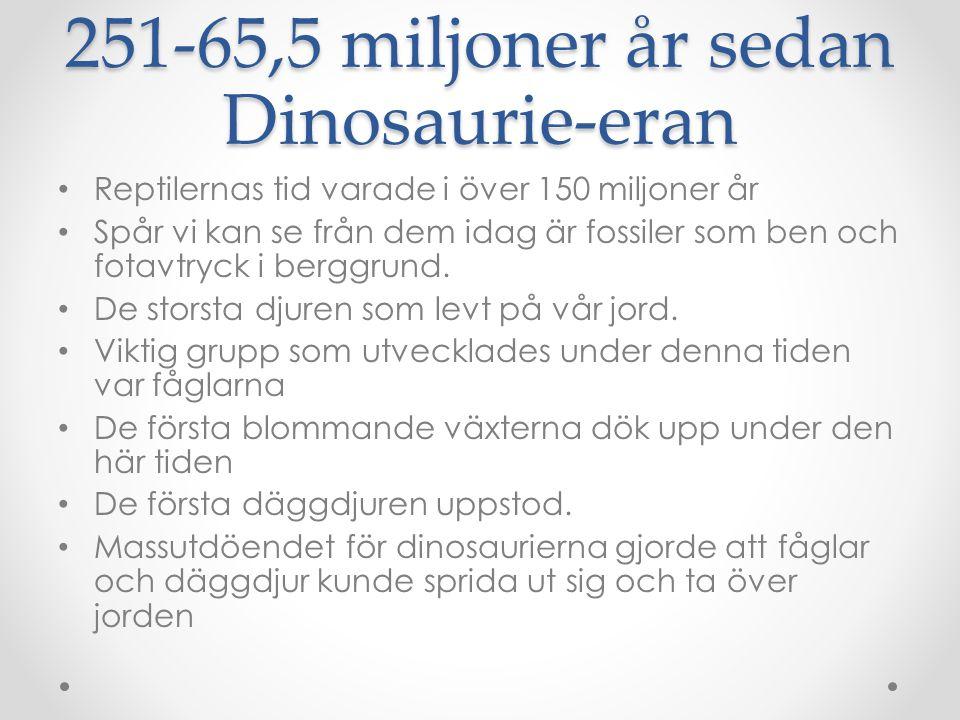 251-65,5 miljoner år sedan Dinosaurie-eran • Reptilernas tid varade i över 150 miljoner år • Spår vi kan se från dem idag är fossiler som ben och fota
