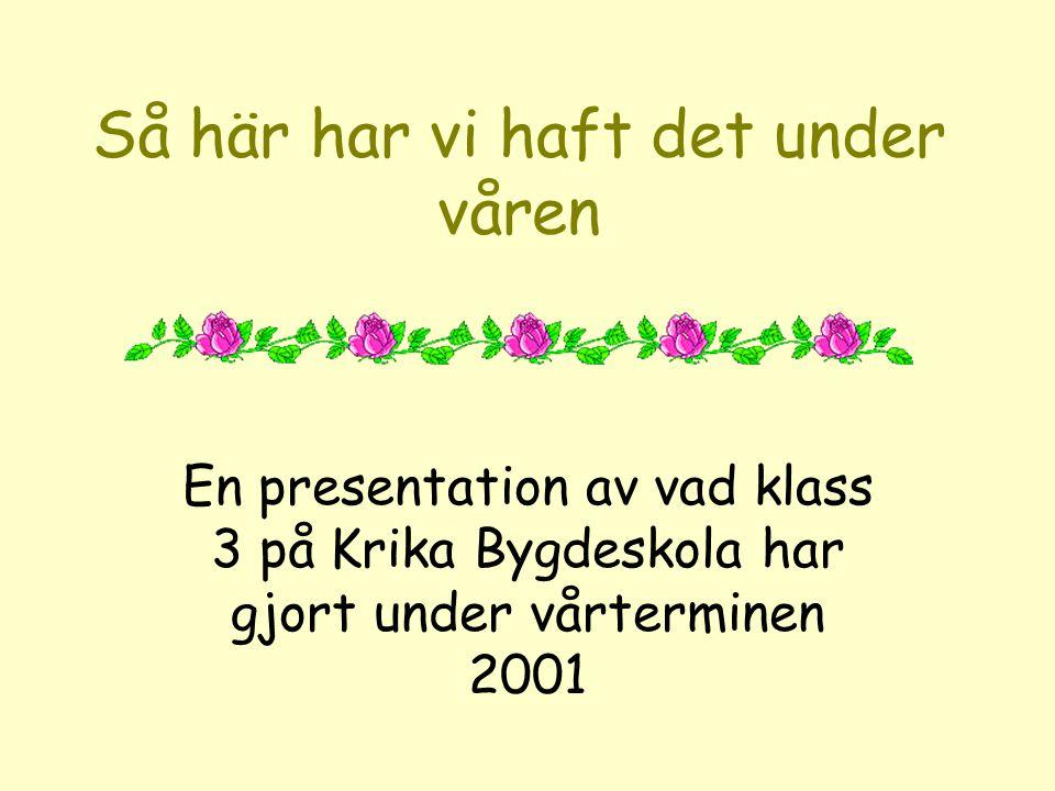 Så här har vi haft det under våren En presentation av vad klass 3 på Krika Bygdeskola har gjort under vårterminen 2001