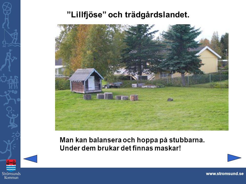 """""""Lillfjöse"""" och trädgårdslandet. www.stromsund.se Man kan balansera och hoppa på stubbarna. Under dem brukar det finnas maskar!"""