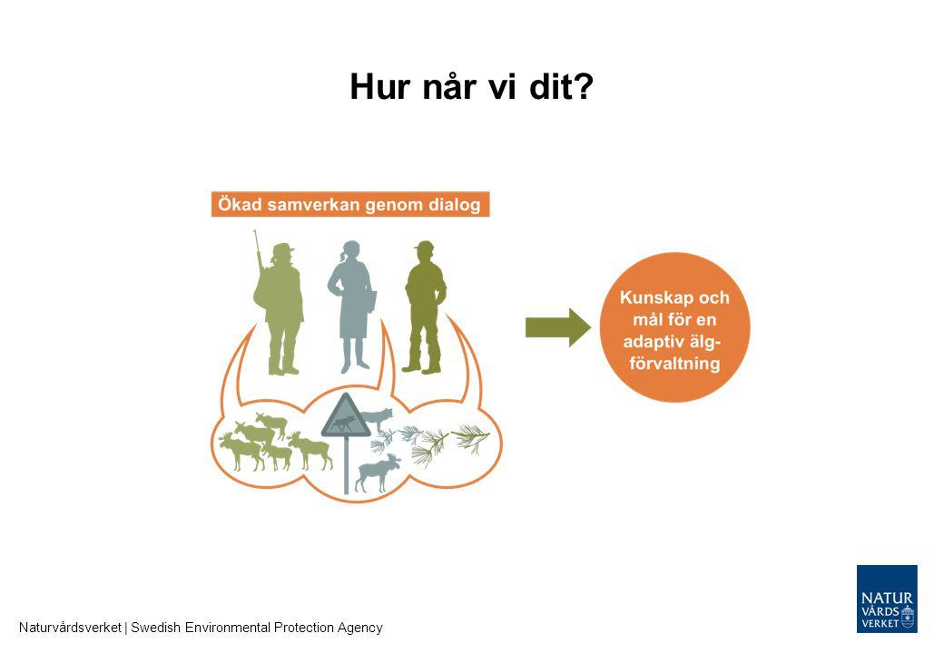 Adaptiv älgförvaltning Naturvårdsverket | Swedish Environmental Protection Agency
