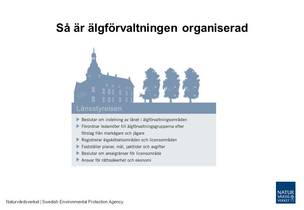 Så är älgförvaltningen organiserad Naturvårdsverket | Swedish Environmental Protection Agency