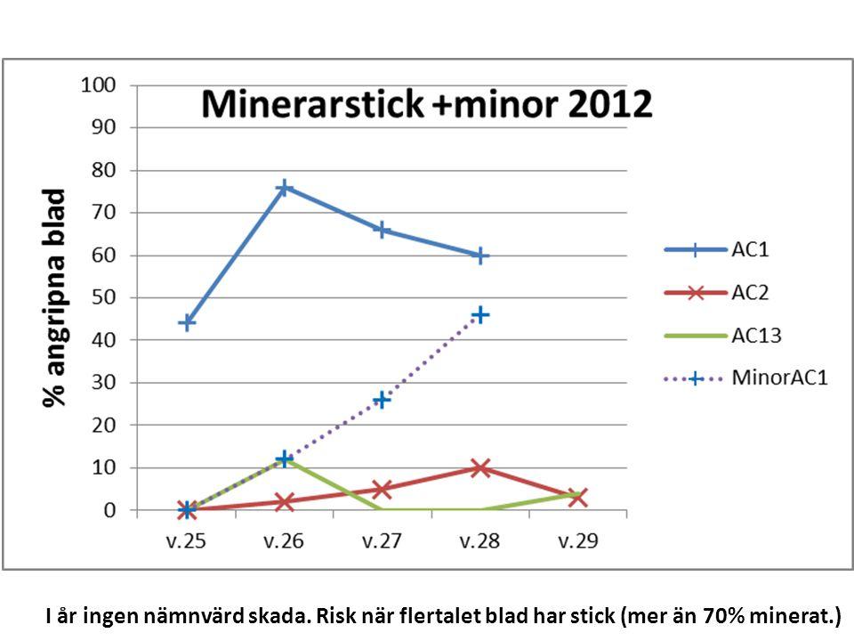 I år ingen nämnvärd skada. Risk när flertalet blad har stick (mer än 70% minerat.)