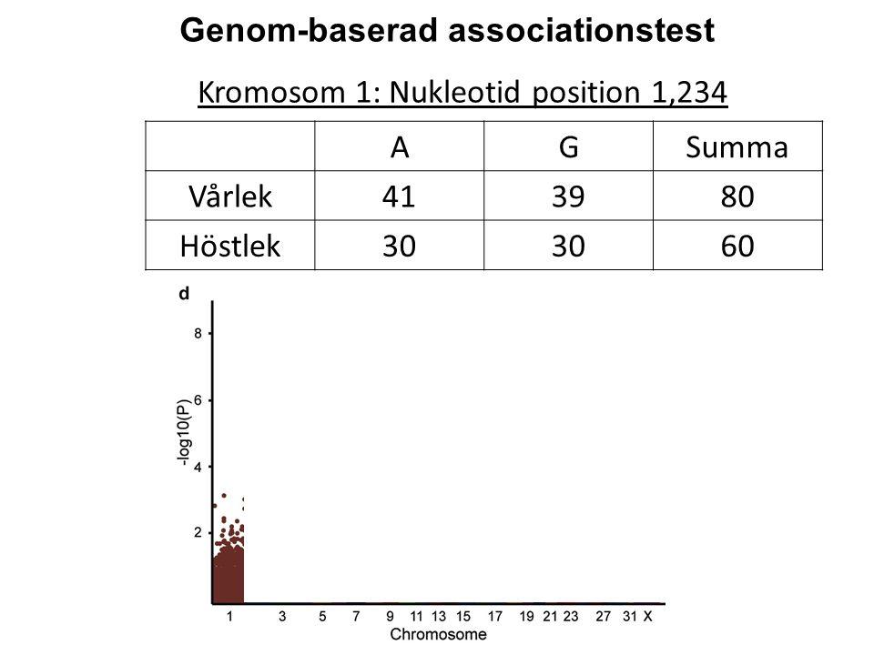 Kromosom 1: Nukleotid position 1,234 Genom-baserad associationstest AGSumma Vårlek413980 Höstlek30 60