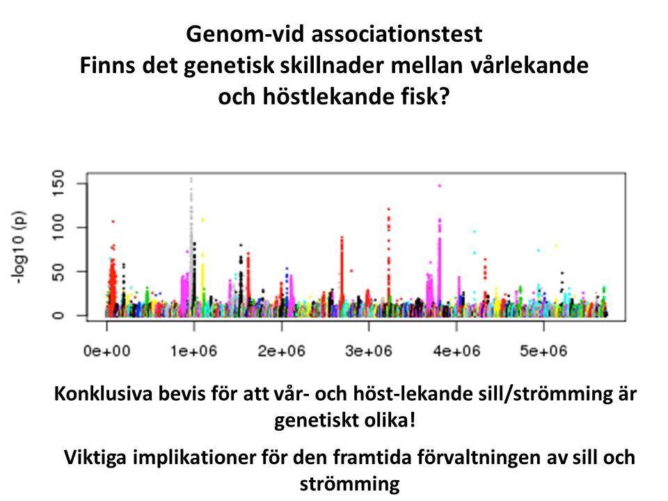 Genom-vid associationstest Finns det genetisk skillnader mellan vårlekande och höstlekande fisk.
