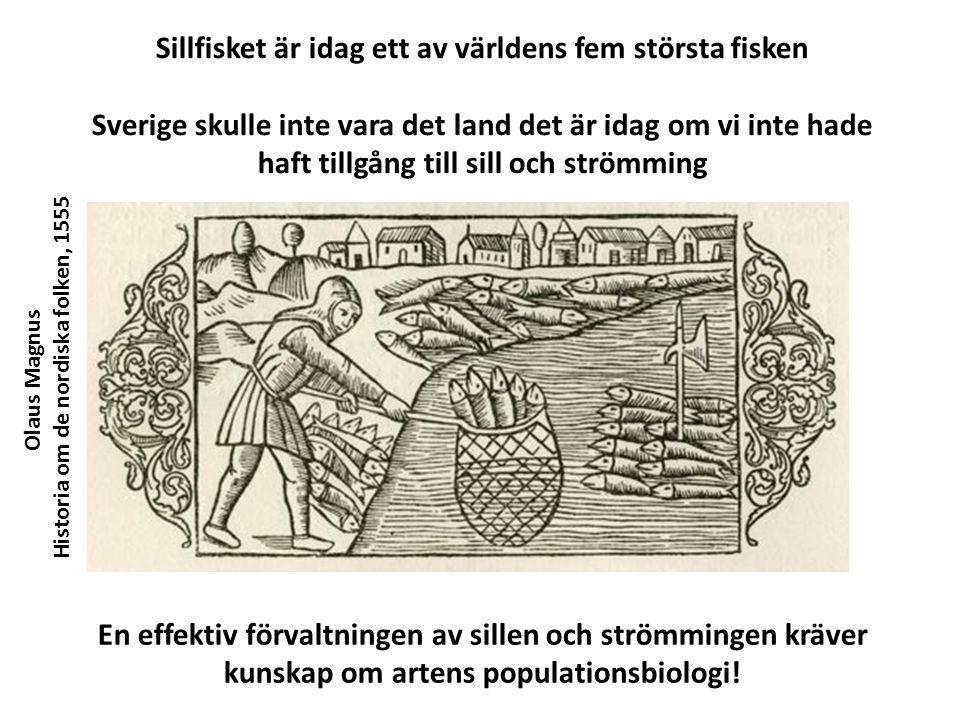 Olaus Magnus Historia om de nordiska folken, 1555 Sillfisket är idag ett av världens fem största fisken Sverige skulle inte vara det land det är idag om vi inte hade haft tillgång till sill och strömming En effektiv förvaltningen av sillen och strömmingen kräver kunskap om artens populationsbiologi!