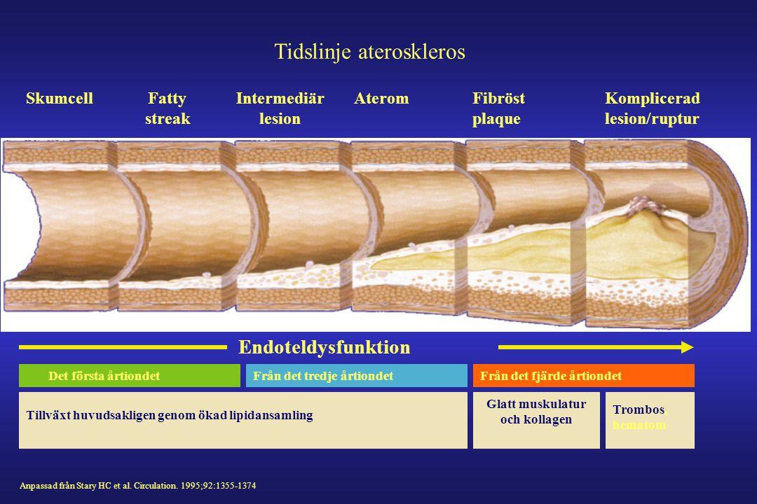 Tidslinje ateroskleros SkumcellFatty streak Intermediär lesion AteromFibröst plaque Komplicerad lesion/ruptur Endoteldysfunktion Anpassad från Stary H