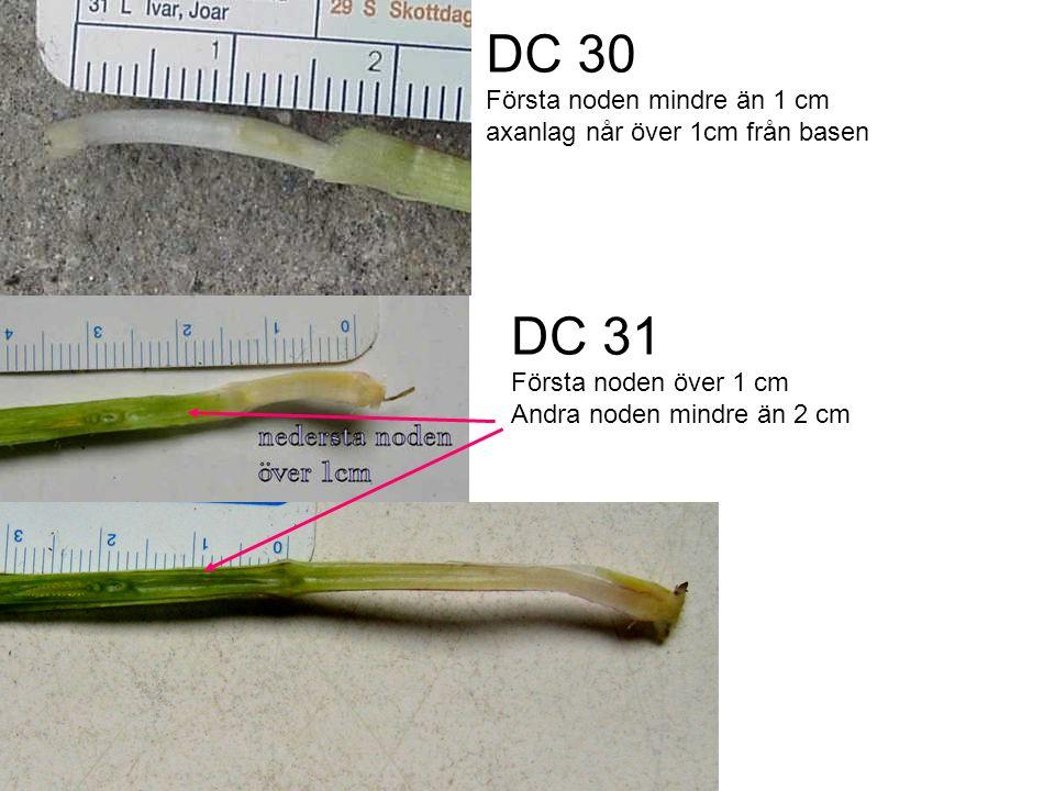 DC 30 Första noden mindre än 1 cm axanlag når över 1cm från basen DC 31 Första noden över 1 cm Andra noden mindre än 2 cm