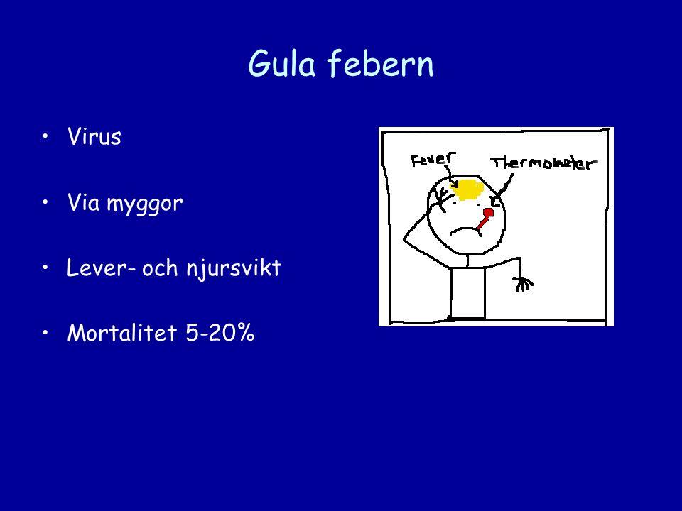 Gula febern •Virus •Via myggor •Lever- och njursvikt •Mortalitet 5-20%